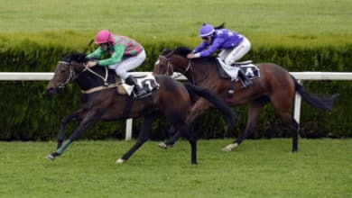 Horse Racing Ireland Sees an Increase in Betting Ring Turnover
