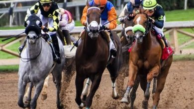 Photo of 2020 Belmont Stakes Betting Trends